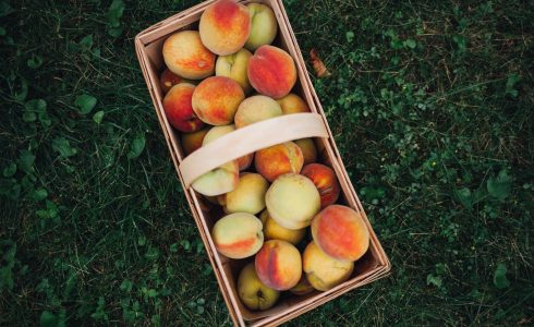 Large basket of peaches on the grassy ground.