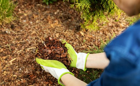 mulching planting oudoors